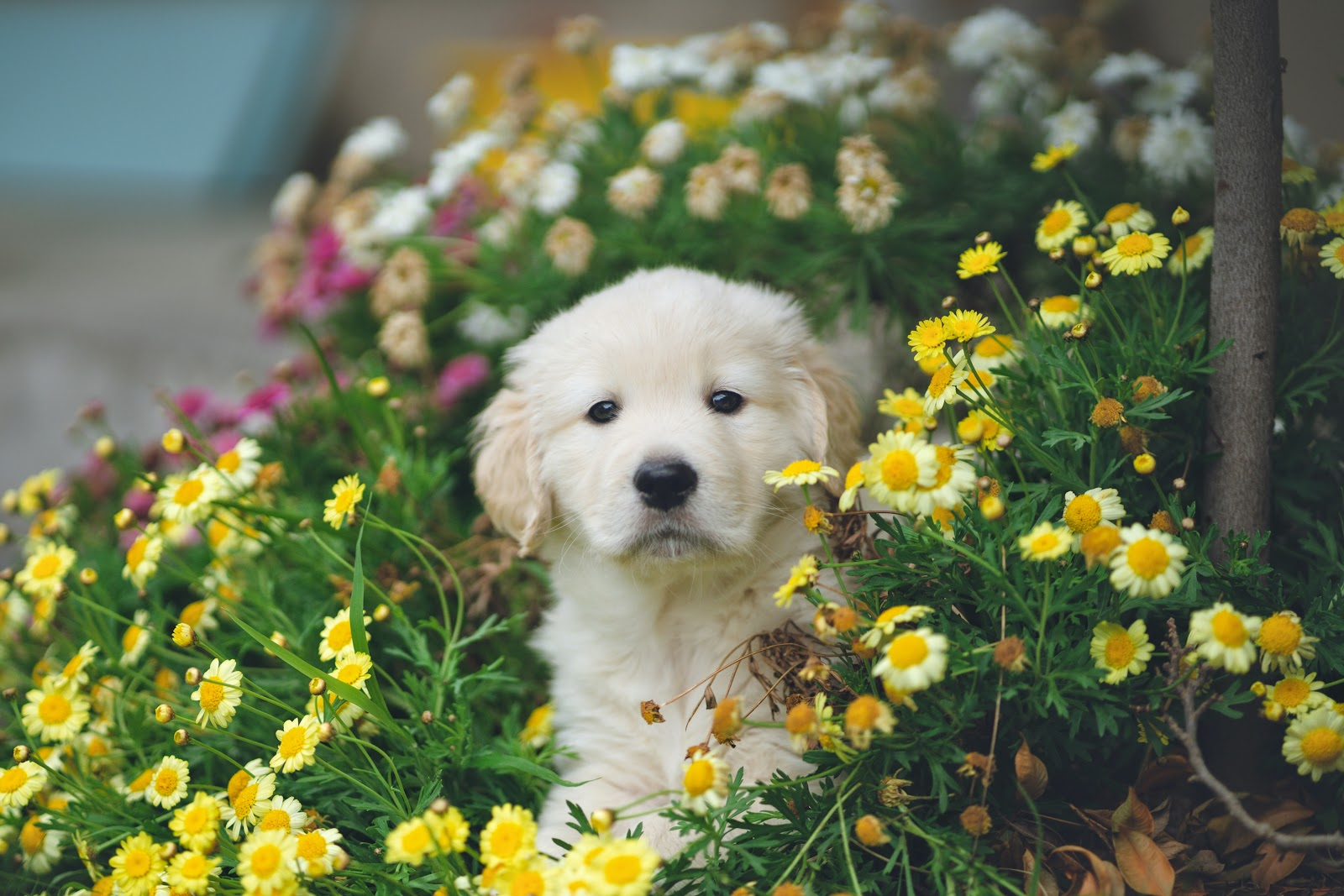 Image for Dog-Friendly Garden Plants Guide
