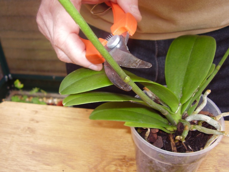 Learn about  How to: New orchids from old